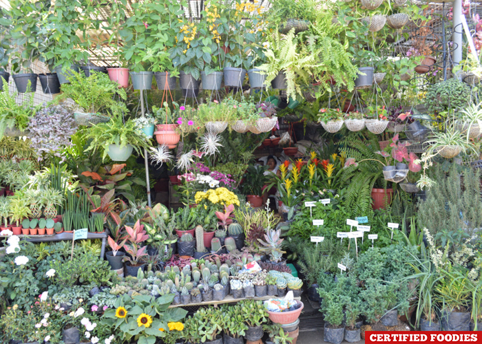 Outdoor Botanical Garden at Farmers Market Araneta Center